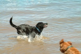 Active dogs are happy healthy dogs!