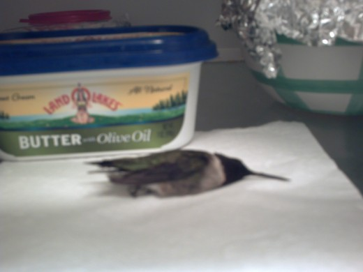 Growing up in my house, it was not unusual to find a dead bird in the fridge.