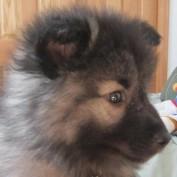 Benvenuto Baci profile image