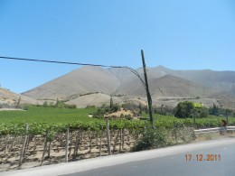 Grapes in Elqui Region of Chile. Notice greenery in comparison to the sand all around!
