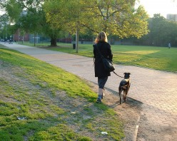 Dog on a leash.