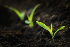 Plant Seeds, Save Money, Be Green