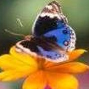sls450 profile image
