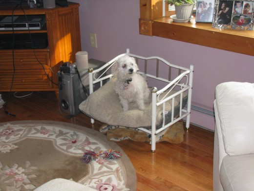 Bandit sitting up in his bed