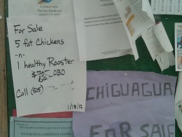 Five fat Chickens and a healthy Rooster for sale.