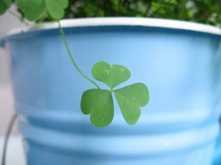 The Tale of Shamrocks and How Four Leaf Clovers Bring Luck