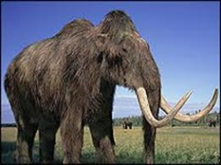 Will scientists some day be able to regenerate the remains of ancient mammals?
