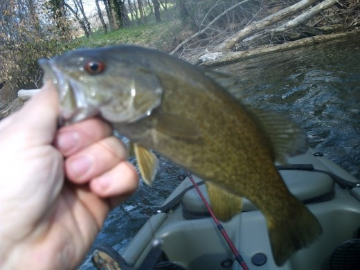 My first small mouth catch of the year.