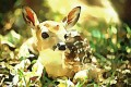 Poetry ~ The Hour-Old Fawn