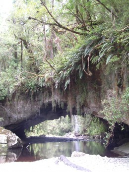 Caves in the west of  South Island, New Zealand