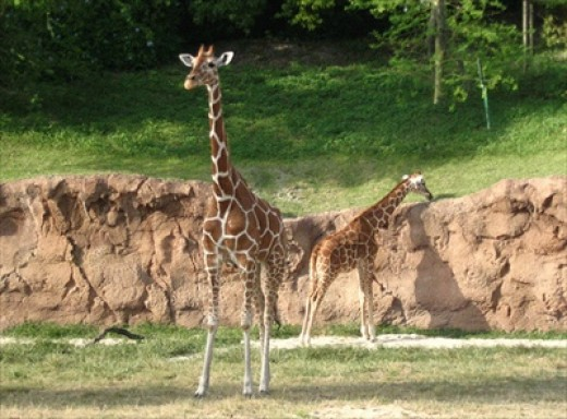 The Serengeti Plain, Busch Gardens Tampa