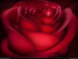 A Girl is Like a Flower