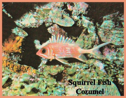 Squirrel Fish