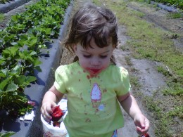 Taking a walk through the strawberry patch!