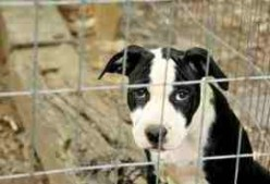 Evne in Britain, thousands of dogs and cats are abandoned every month.  Many are euthenized.