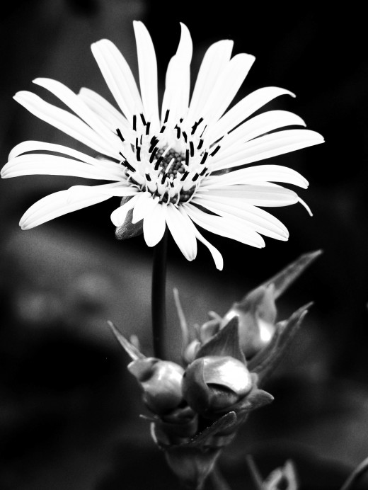 A great black and white.  Color the flower only and leave the background.