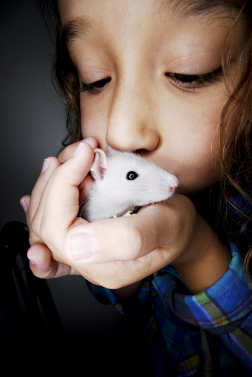 Do rats make great family pets?