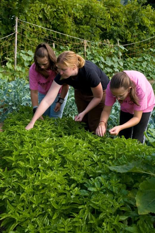 Vista Volunteer working with youth in a community garden.
