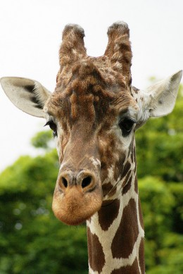 Visit the zoo! Celebrate Zoo Lovers Day!