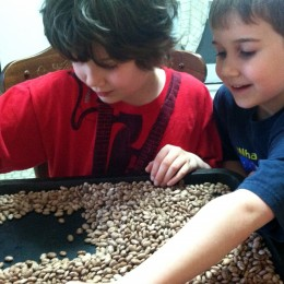 Sort beans on a cookie sheet, this a fun task for kids to get involved in.