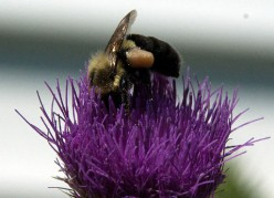 A good bee is a busy bee!  How many of us grew up hearing that lesson?