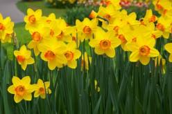 Haiku about Spring