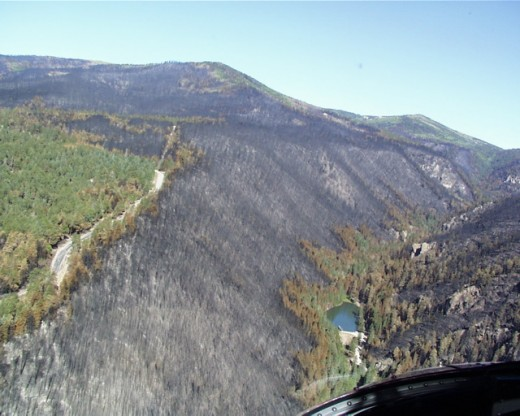 The fire was blown down into the canyon by the wind. Like many Southwest canyons, the canyon's south side was heavily forested; on the north side vegetation was lighter but wind and terrain favored the fire.  Water at the bottom saved trees there.