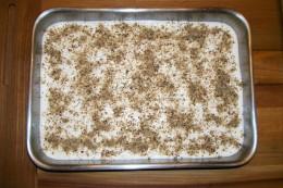 Cheesecake with optional chopped walnuts.