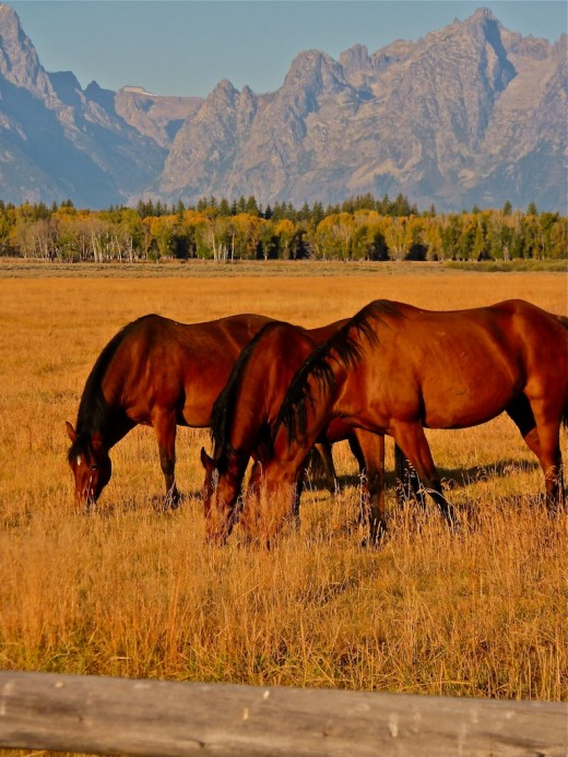 I waded through a few hundred yards of undergrowth to get close to these three horses. The lighting was perfect!