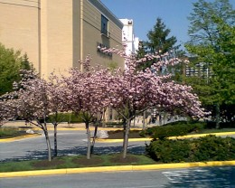 Towson Town Center in the Spring