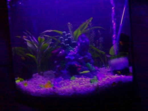 Lighting can do wonders for a newly setup aquarium. Here I have replaced the original flourescent tube within the fixture that had come with the tank and replaced it with an actinic gro bulb, which gives the tank a purplish hue, due to the spectrum.