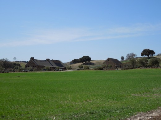 Green grass in front of Niner Estates Winery and Tasting Room, Paso Robles, March 22, 2012