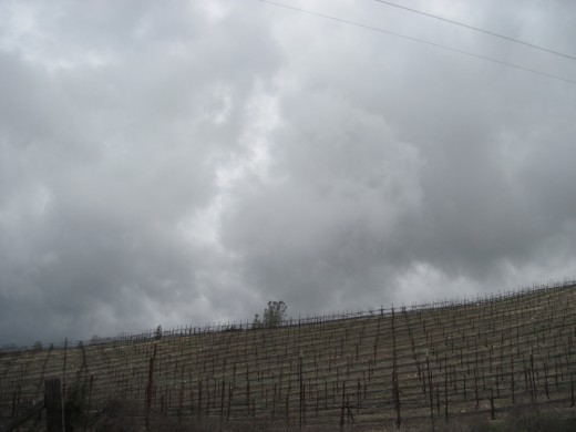 Rain comes to the vineyards.