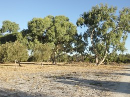 Make contact with the traditional owners of your place, humbly receive their wisdom and the dreaming of your land...