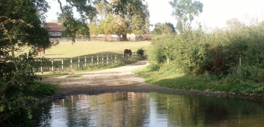 Megan's favorite swimming pool and paddock where she was kicked by the neighbor's horse