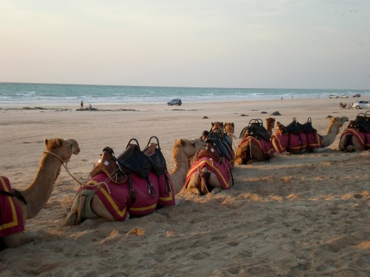 Camel Ride during sunset at Cable Beach, Broome, Western Australia.