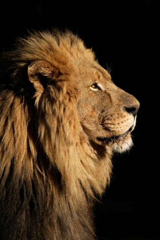 """Do not weep. Behold, the Lion of the tribe of Judah, the Root of David, has prevailed """