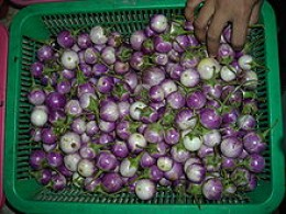 These eggplants are small, round and vary in color from white to dark purple. Photo used with permission