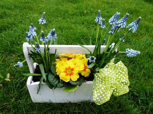 Primrose and Grape Hyacinth
