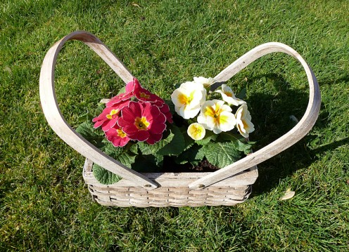 Basket of Primroses ideal for a window-sill