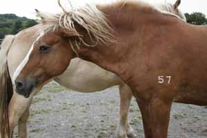 The number is because names are not given. This is a rescued Premarin mare.