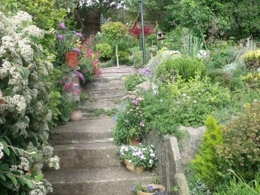 From Megan's garden