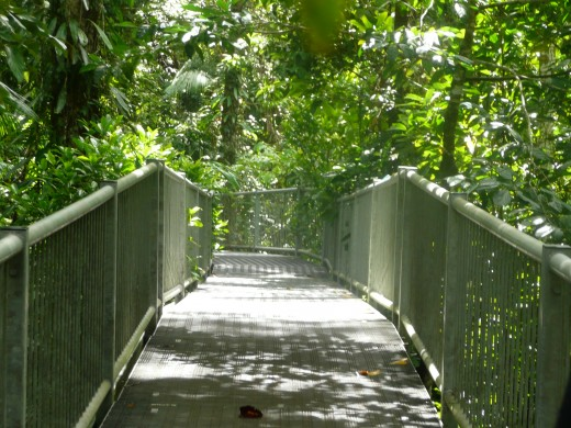 The walkway over the rainforest