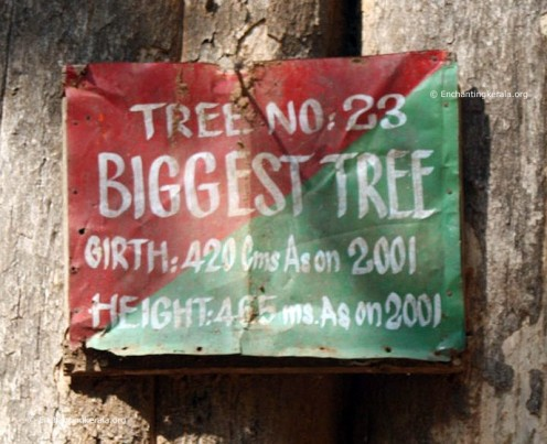 Name plate on tree