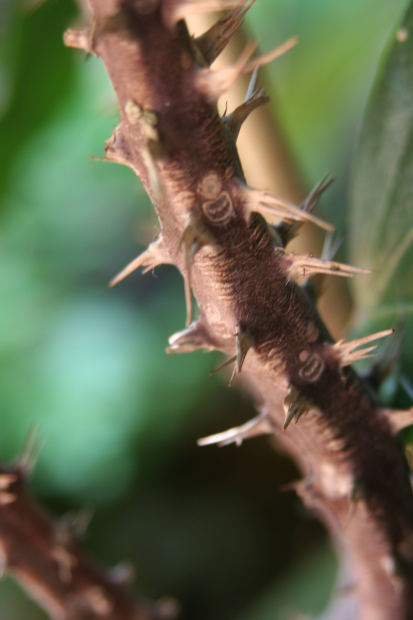 You could believe that your fingers got into an argument with a thorn bush every hour or so...