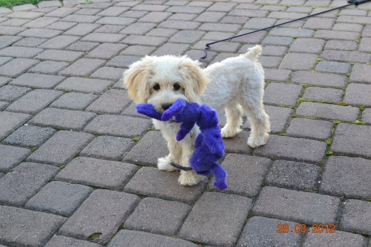 Annie and her new toy
