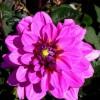 Top Ten Purple Plants to grow in The Garden
