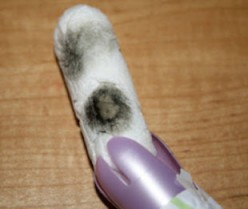 Health Scare! Tampon found to have Mold!