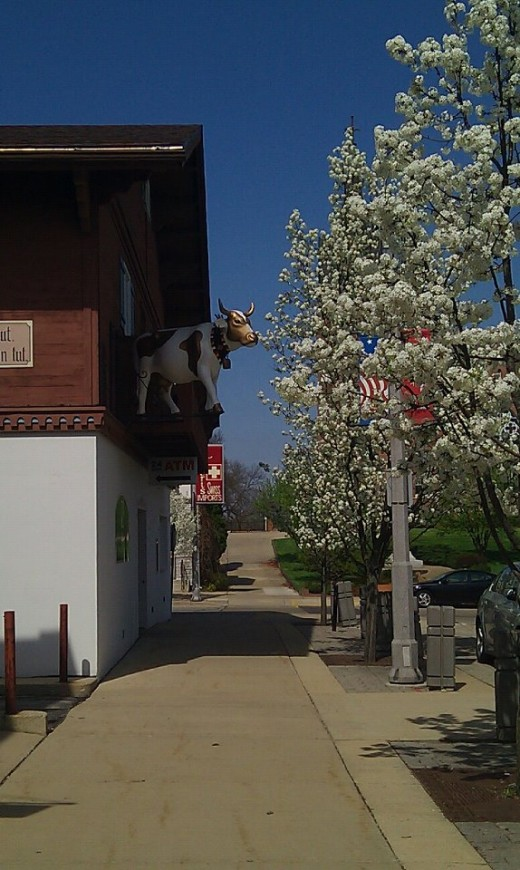 Gold and White Bank of New Glarus cow