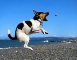 Is your dog or cat a fly or bug catcher and are they any good at it, do you wonder why they do it?